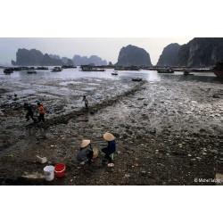 Le port de pêche de Hongai