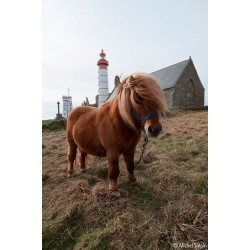 Poney à la pointe Saint-Mathieu, Plougonvelin