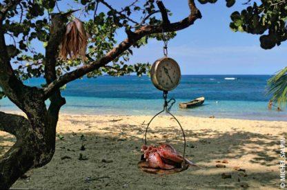 Pesée de la pêche sur la plage de Las Ballenas à Las Terrenas dans la péninsule de Samana en République dominicaine