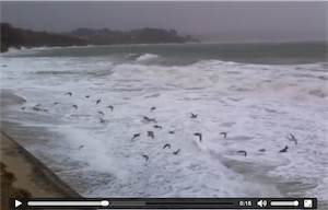 Gros coup de vent au Trez-Hir à Plougonvelin