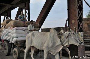 Agra-inde-015