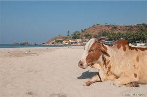Goa-inde-024