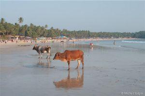 Goa-inde-026