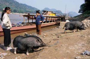 Luang-prabang-laos-011